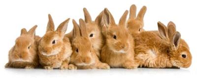 Impfungen für Kaninchen